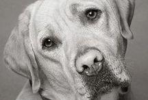 Puppy Love / Man's best friend / by Beth Phillips