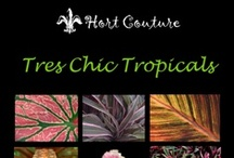 HC Signs to Look For / by Hort Couture