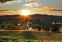 Scenic Napa / Escape to the rolling vineyards of California Wine Country. Our picture-perfect scenery illuminates relaxation and rejuvenation for Napa vacations and getaways. / by Meritage Resort