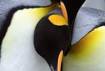 Penguins / by Manuel Meersohn