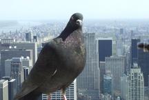 New York, New York! / by Sandy Hunt