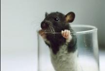 rat darlings. / by Meg Currie