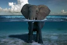 Animals! / by Keya Rowan