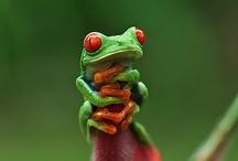 Frogs / by David Ward