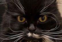 Crazy cat lady / by Heather Willard