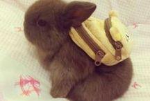 it's so fluffy!!! / ....im gonna die!!! / by Emily C