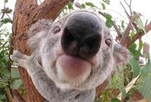 Dogs, Elephants, Koalas, and Swans / by Melissa Johnson