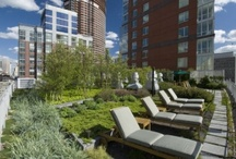 Rooftop's Garden / The world is going green and the big buildings too... / by BrokerPulse