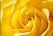 Amarelo.... / by Letícia Mayrink