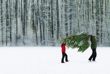 Winter Wonderland / by Lauren Garvin