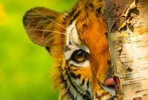 Naturals / Nature & Animals  / by Pinnie