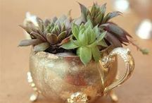 GARDEN THERAPY: Projects / I want to make all the things. Oh yes, I do.  / by Stephanie @ Garden Therapy