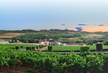 Wine Production  / This board is dedicated to showcasing the complete process of producing our wines.   / by Segura Viudas USA