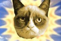 Grumpy Cat / Her name is Tarder & she's hilarious / by Melissa