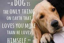 Animals: Cats&Dogs! / by Kattie Sue