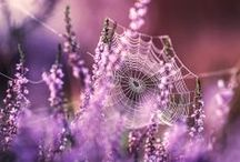 SPIDER WEB BEAUTY / by Debby Moore