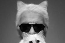 Critters / by Kristen Hendy