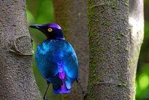 birds / all kinds of birds / by Georgia Morrow