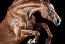 horses I love / by Georgia Morrow