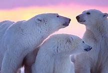 Brother bear / Big teddies.  / by Skyler Tilley