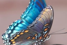 Butterfly Kisses and Dragonfly Days / by Carolyn Hutson