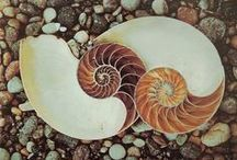 Sacred Geometry in Nature / by Kitty Cat  m a d e l y n