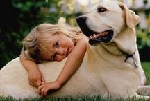 My baby dogs Cole & Jack / I love my baby doggies!!! / by Jennifer Roberts