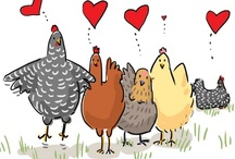 Chickens 101 / Everything chicken! / by Katelyn Klump