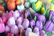 Beautiful Blooms / by Debbi Ernest