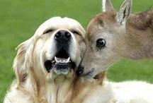 Dogs & friends / by Debbi Ernest