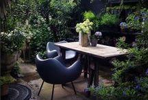 My Garden / Snap shots of my London garden / by Abigail Ahern