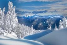 Winter Wonderland / by Michele Caine