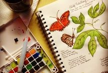 2013-2014 School Year / Curriculum / Ideas / by Allison Petit