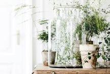 PLANTS.  / by Elizabeth Jacob