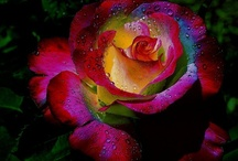 Flowers & Floral Design / Just flowers....pretty flowers. / by Mary Martinez