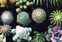 flora / by Johana Barretto