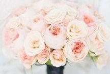Wedding.  / by Jobeth