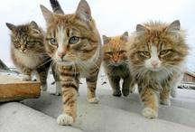 Meow! / by Gladys Lau
