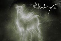 Potter <3 / by Arielle Barels