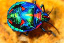 Neat bugs / by Krishna