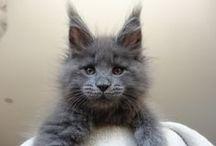 I Love Kitties SO much!!! / by Paula Ann Ford