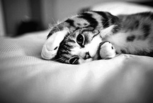 Cats / by Shana Galen
