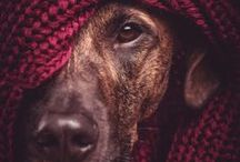 DoG♥♥PhoToGrapHy / by Brie Kristine