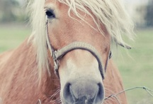 HORSES / by ✧ Charlotte ✧