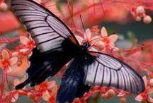 Beautiful / by Debbie Miller