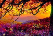 Autumn Splendor / by Barb Vigil