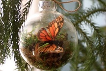 Christmas Ornaments / by Bonnie
