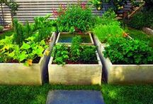 For the Garden / by Kathleen Jones-Monte