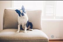 Bean Dog Obession / by Meg Sexton