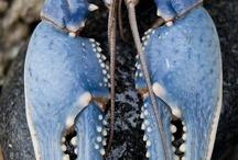 blue. / by heather macdonald